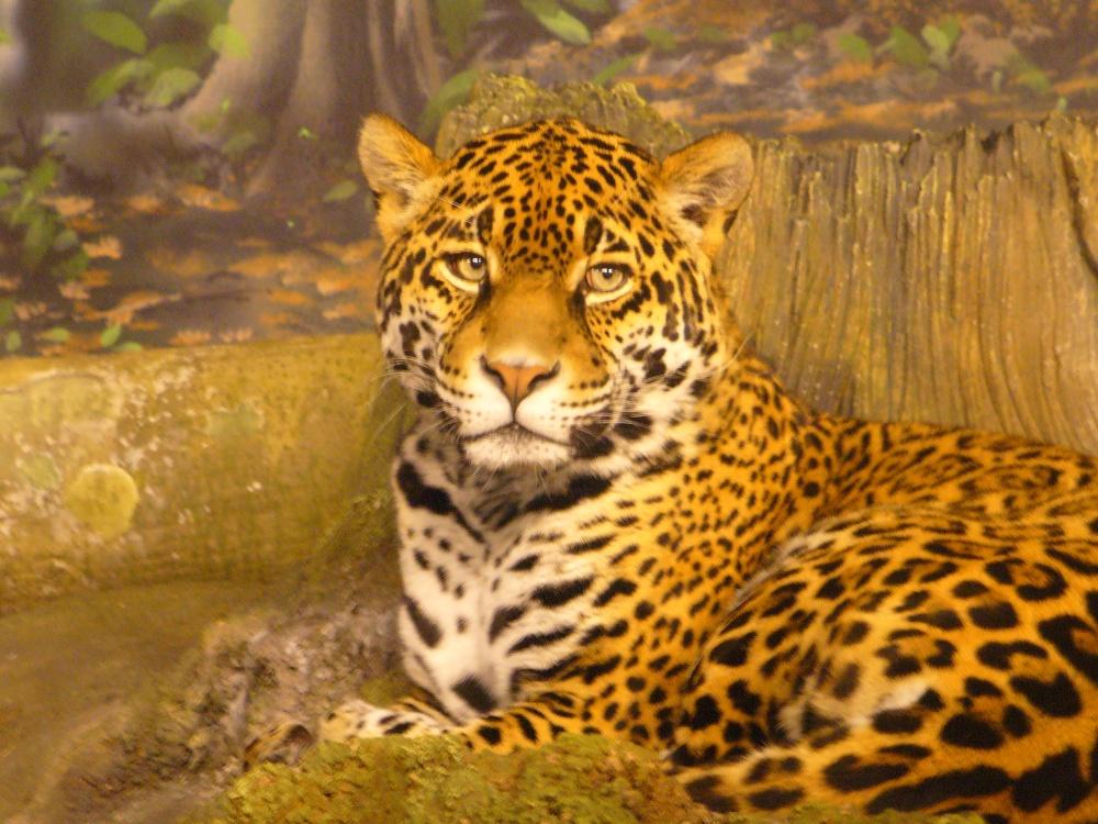 stockvault-jaguar107108