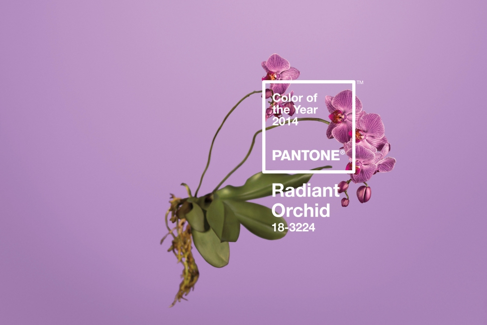 Radiant-Orchid-Pantone-18-3224-600